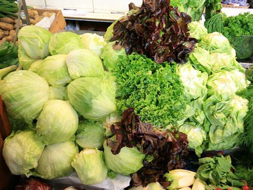 各式各樣的萵苣。 圖片來源:Wikimedia